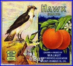 306294 Walnut Los Angeles County Hawk Bird Orange Fruit Crate POSTER Affiche