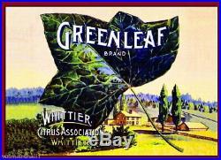 98416 Whittier Los Angeles County Greenleaf Lemon Decor LAMINATED POSTER US